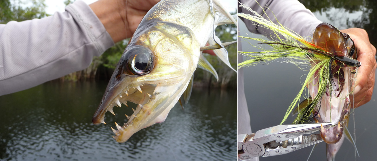 Amazon fly fishing for Amazon fly fishing